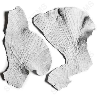 Обрезки кожи крокодила | Цвет: Белый